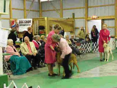 Judges and Exhibitors alike Dressed in Pink For Our Purebreds In The Pink Day.